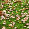 autumm leaves
