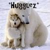 Wolf, Polar bear - Hugglez